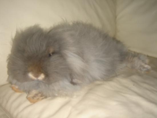 Baby perl en mode détente sur le canapé